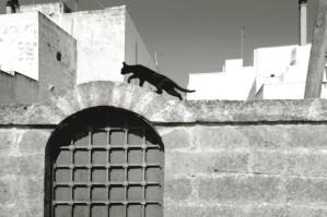 il gatto sul muro a castro